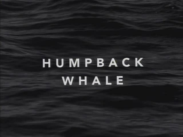 Image:Humpback_Whale_Cover.jpg