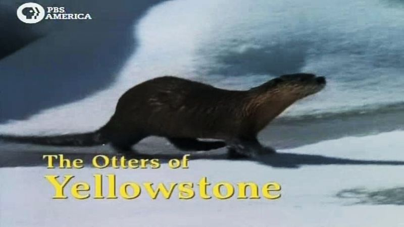 Image: Otters-Of-Yellowstone-Cover.jpg