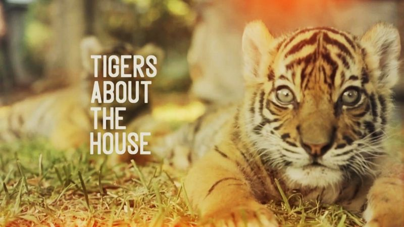 Image: Tigers-about-the-House-Cover.jpg