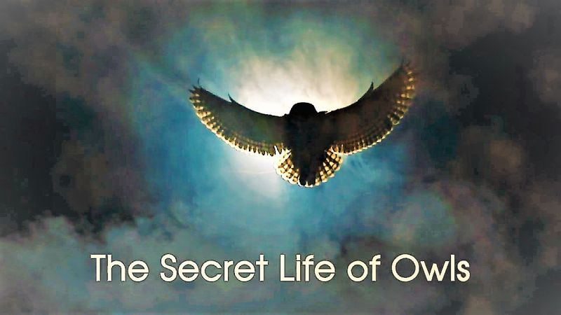 Image: The-Secret-Life-of-Owls-Cover.jpg