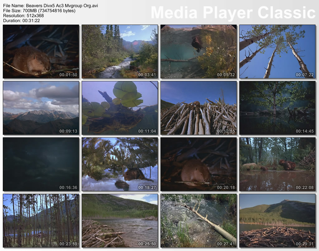 Image:Beavers_screen1.jpg
