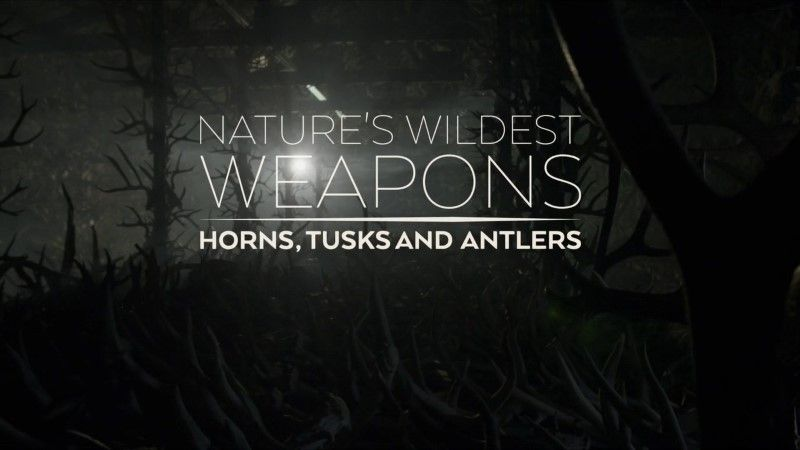 Image: Nature-s-Wildest-Weapons-Cover.jpg