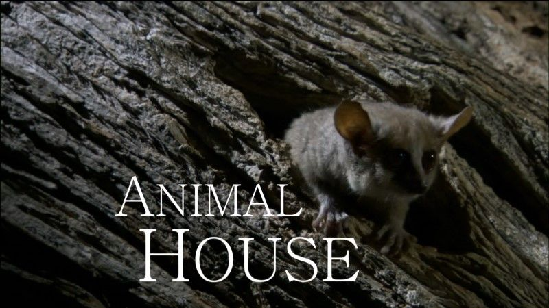 Image: Animal-House-BBC-1080p-Cover.jpg