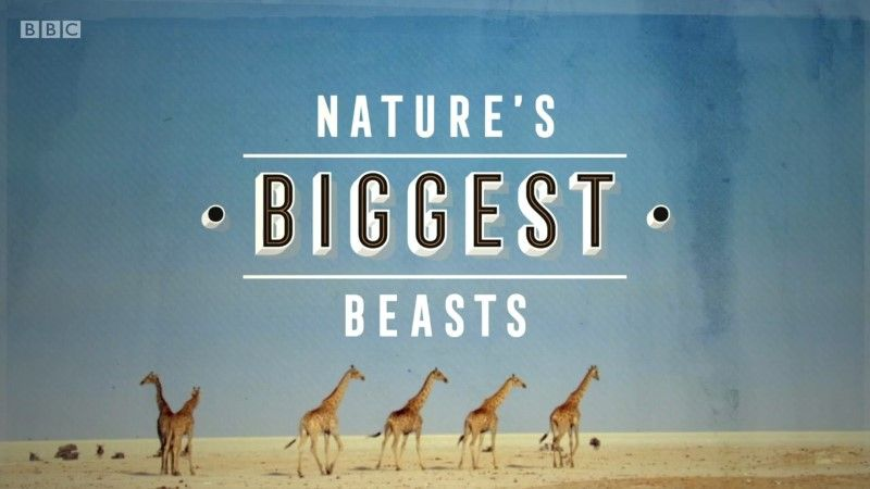 Image: Nature-s-Biggest-Beasts-Cover.jpg