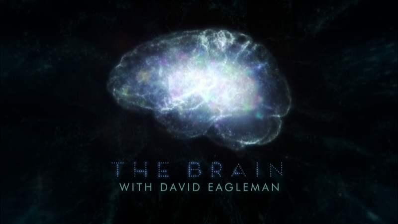 [Imagem: The-Brain-with-David-Eagleman-Cover.jpg]