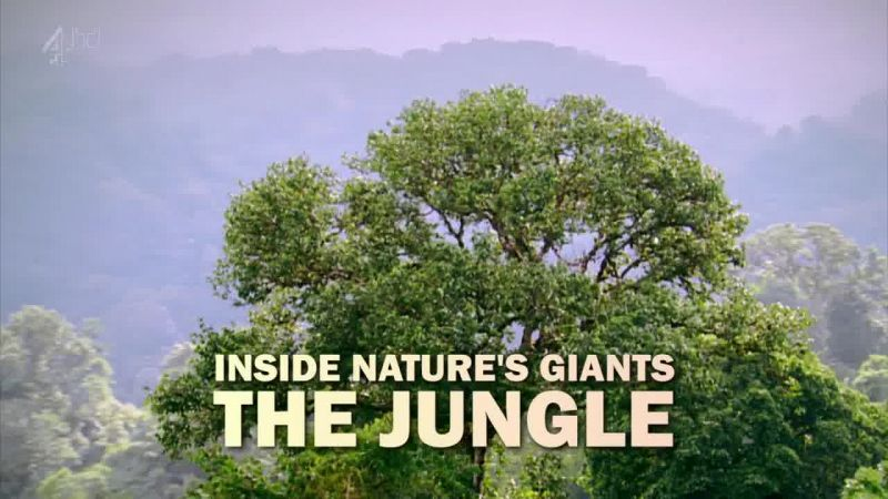 Image: The-Jungle-Ch4-Cover.jpg