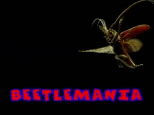Image: Beetlemania-Cover.jpg