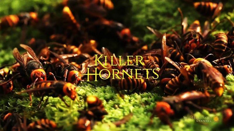 Image: Killer-Hornets-Cover.jpg