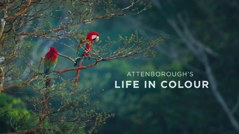 Image: Life-in-Colour-BBC-Cover.jpg