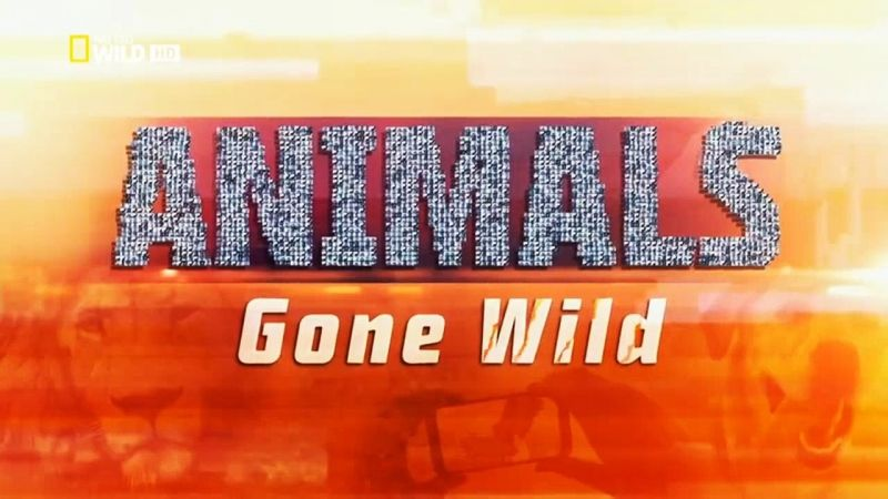Image: Animals-Gone-Wild-Cover.jpg