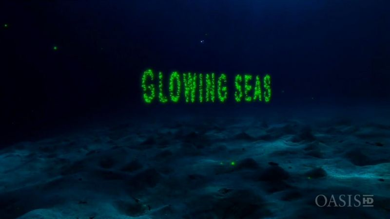 Image: Glowing-Seas-Diving-at-Hatshepsut-s-Harbour-Cover.jpg