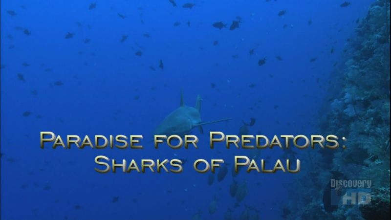 Image: Paradise-for-Predators-Sharks-of-Palau-Cover.jpg