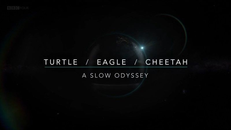 Image: Turtle-Eagle-Cheetah-A-Slow-Odyssey-Cover.jpg