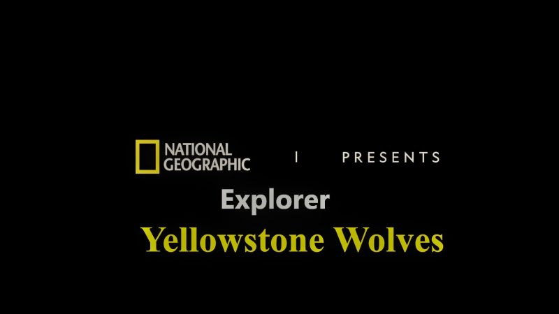 Image: Yellowstone-Wolves-Cover.jpg