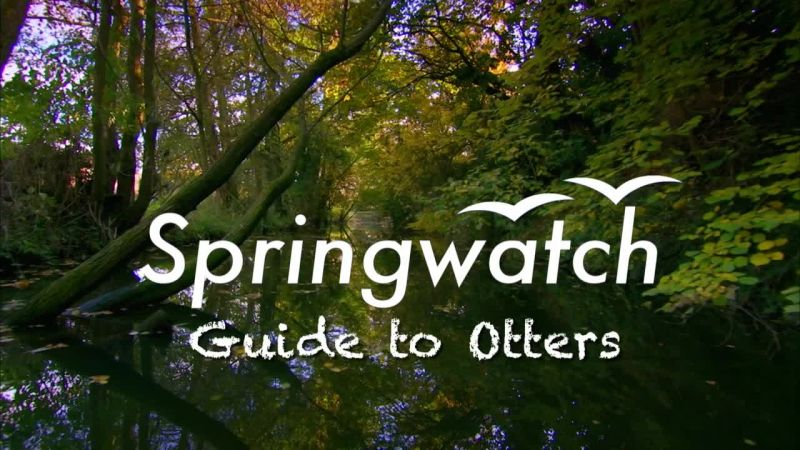 Image: Springwatch-Guide-to-Otters-Cover.jpg