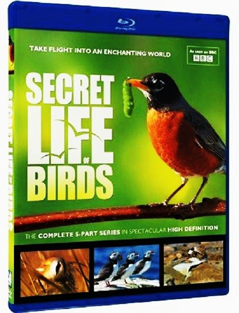Image: The-Secret-Life-of-Birds-Cover.jpg