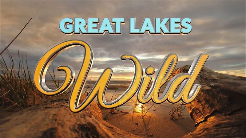 Great Lakes Wild Series 1 2of8 Invaders from the Deep 1080p HDTV x264 AAC MVGroup org mp4 preview 0