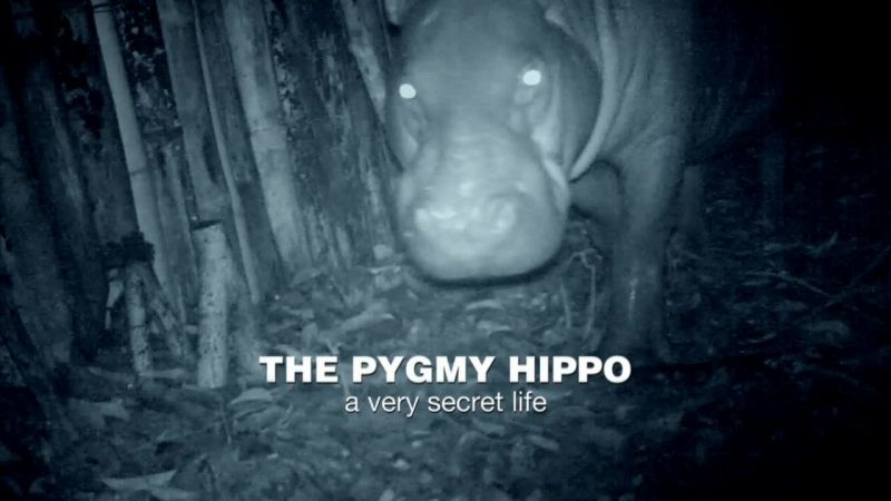Image: The-Pygmy-Hippo-A-Very-Secret-Life-Cover.jpg