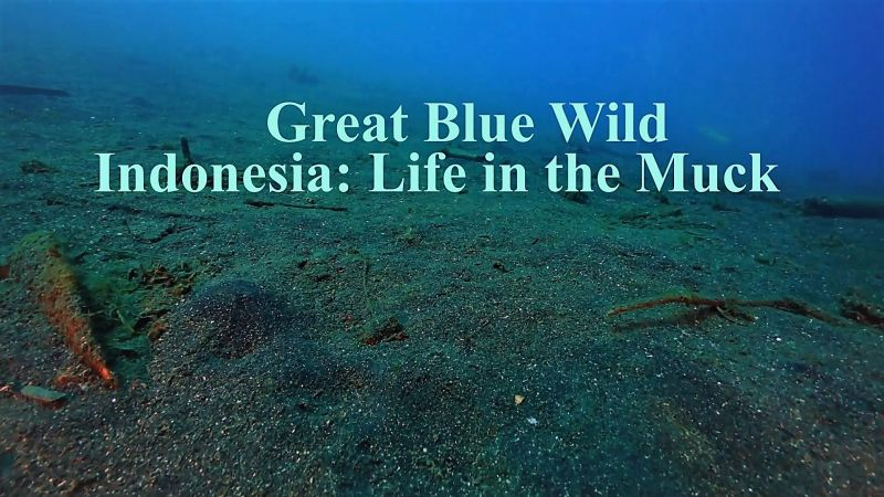 Image: Great-Blue-Wild-Series-1-Part-12-Indonesia-Life-in-the-Muck-Cover.jpg