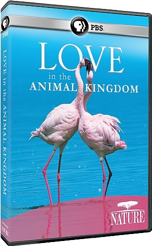 Image: Love-in-the-Animal-Kingdom-Cover.jpg