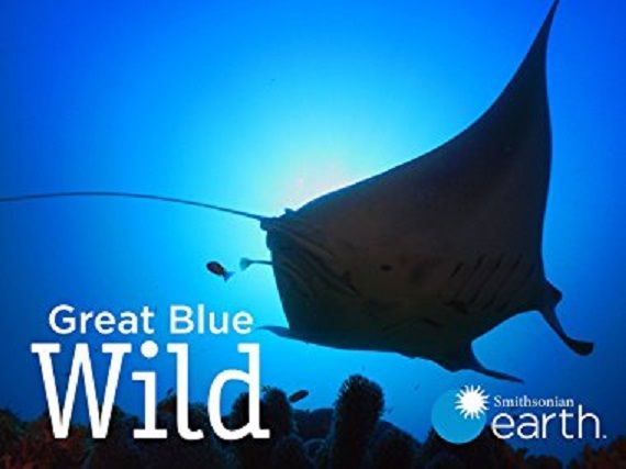 Image: Great-Blue-Wild-Series-1-Cover.jpg