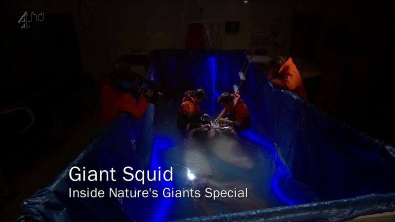 Image: Giant-Squid-Ch4-Cover.jpg