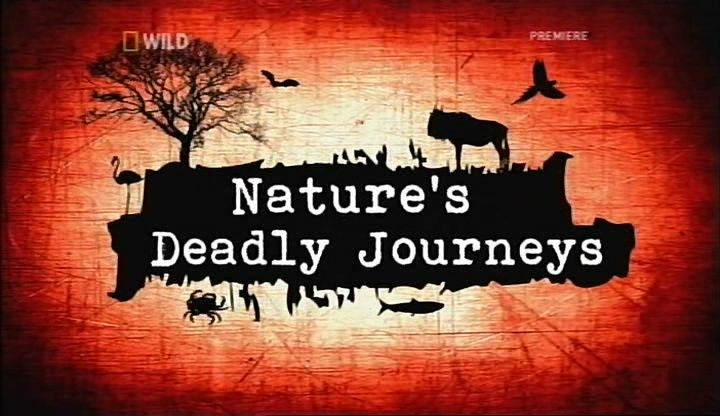 Image: Nature-s-Deadly-Journeys-Cover.jpg