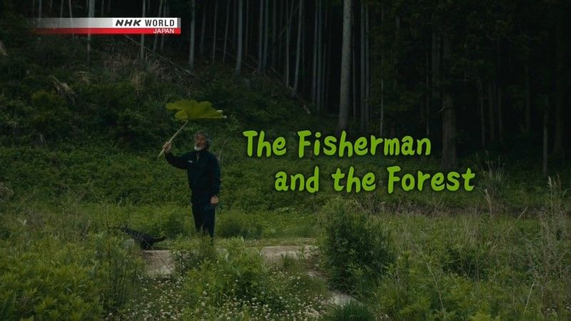 Image: The-Fisherman-and-the-Forest-Cover.jpg