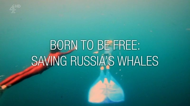 Image: Born-to-be-Free-Saving-Russia-s-Whales-Cover.jpg