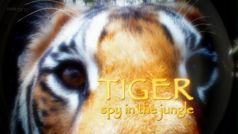 Image: Tiger-Spy-in-the-Jungle-BBC-Cover.jpg