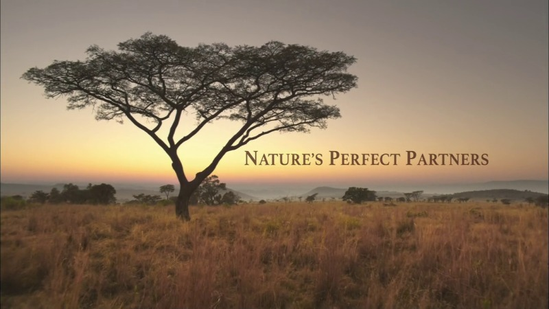 Image: Natures-Perfect-Partners-Cover.jpg