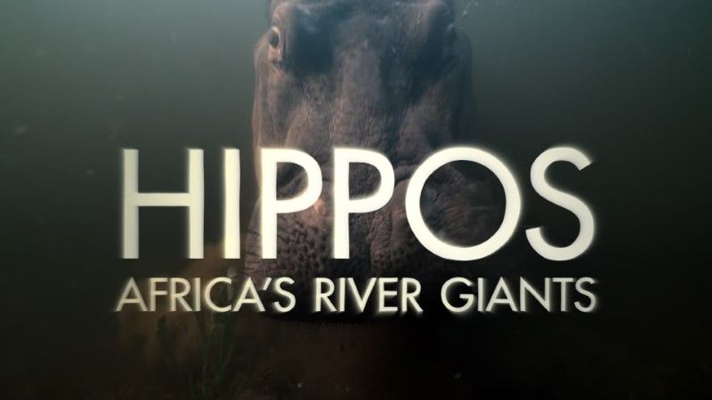 Image: Hippos-Africa-s-River-Giants-Cover.jpg