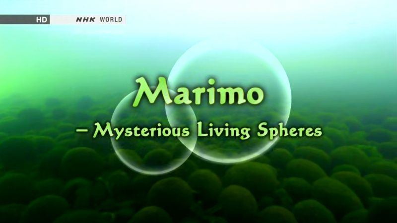 Image: Marimo-Mysterious-Living-Spheres-Cover.jpg