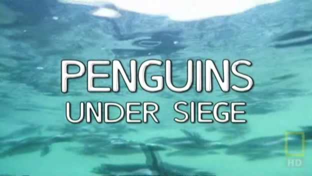 Image:Penguins_under_Siege_Cover.jpg