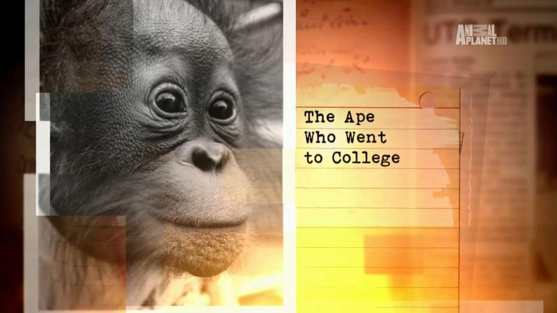 Image: The-Ape-Who-Went-To-College-Cover.jpg