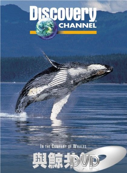 Image: In-the-Company-of-Whales-Cover.jpg