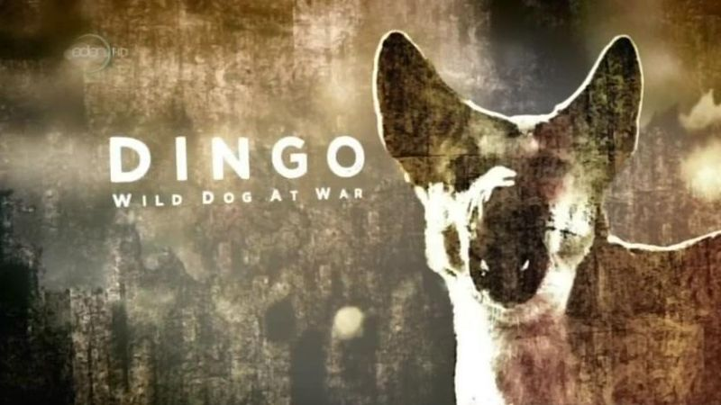 Image: Dingo-Wild-Dogs-at-War-Cover.jpg