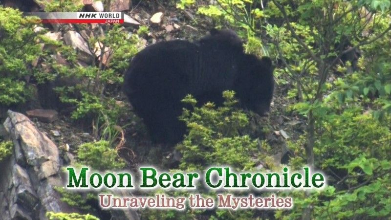 Image: Moon-Bear-Chronicle-Cover.jpg
