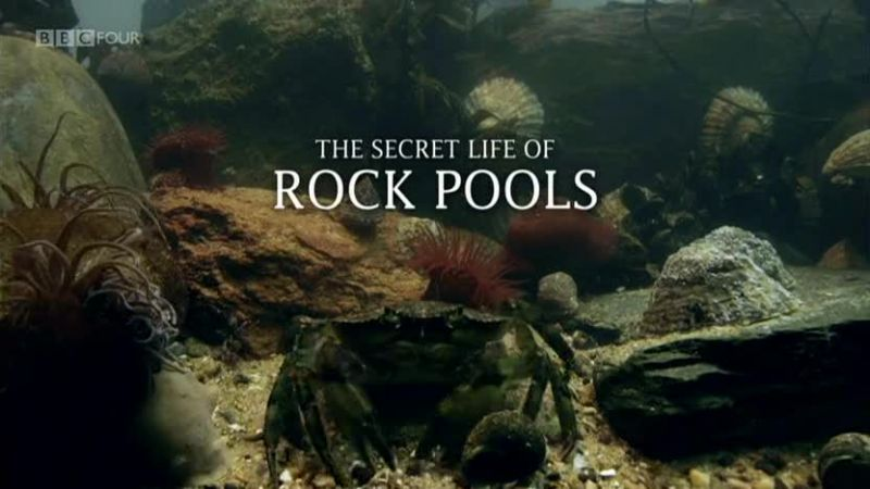 Image: The-Secret-Life-of-Rock-Pools-Cover.jpg