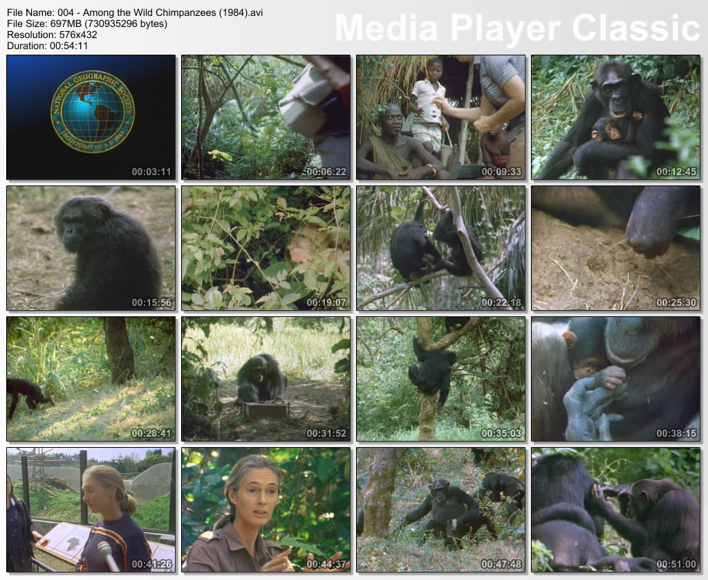 Image: Among-the-Wild-Chimpanzees-Screen0.jpg