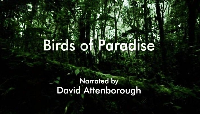 Image: Birds-of-Paradise-Cover.jpg