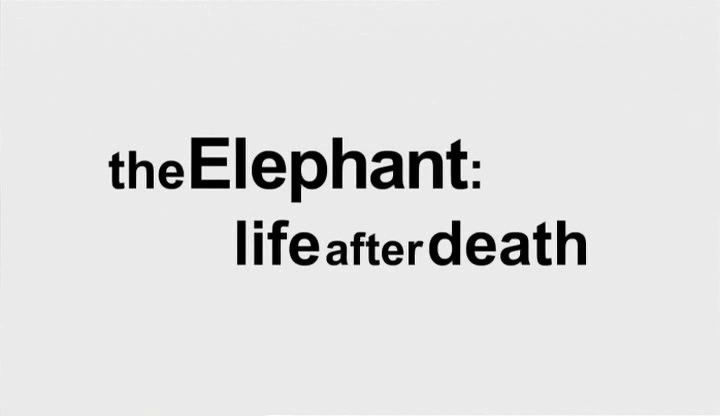 Image: The-Elephant-Life-after-Death-Cover.jpg