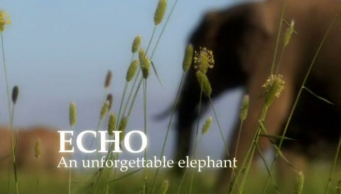 Image: Echo-An-Unforgettable-Elephant-Cover.jpg
