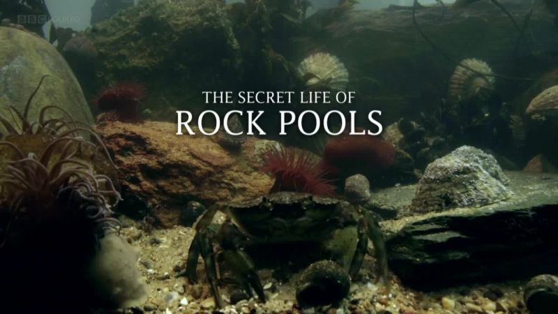 Image: The-Secret-Life-of-Rock-Pools-BBC-Cover.jpg