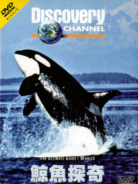 Image:Ultimate-Guide-Whales-Cover.jpg