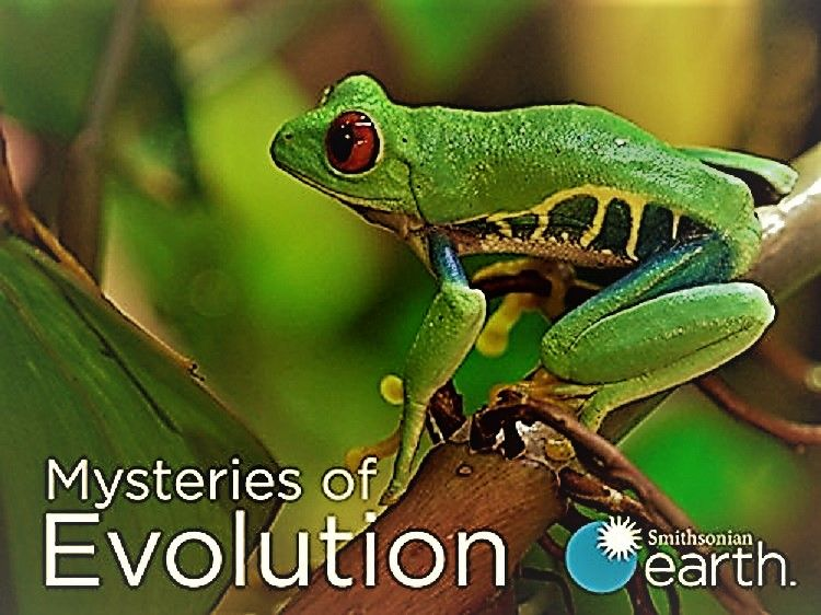 Image: Mysteries-of-Evolution-Series-1-Cover.jpg