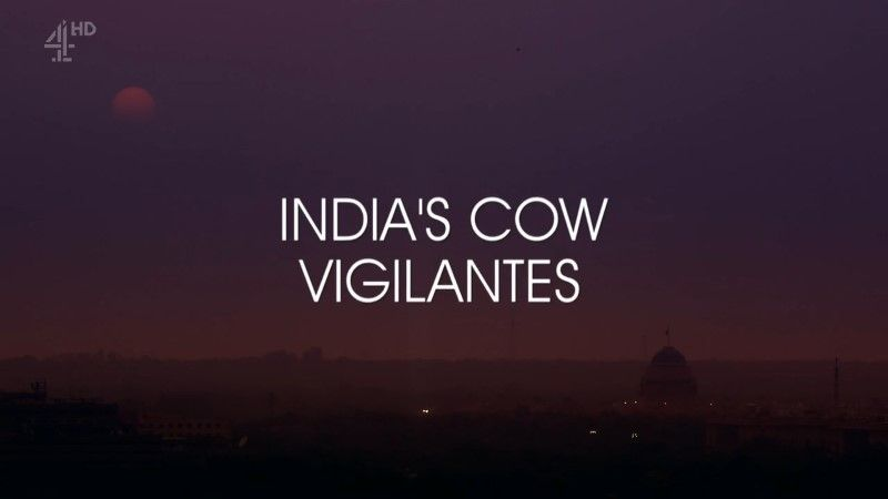 Image: India-s-Cow-Vigilantes-Cover.jpg
