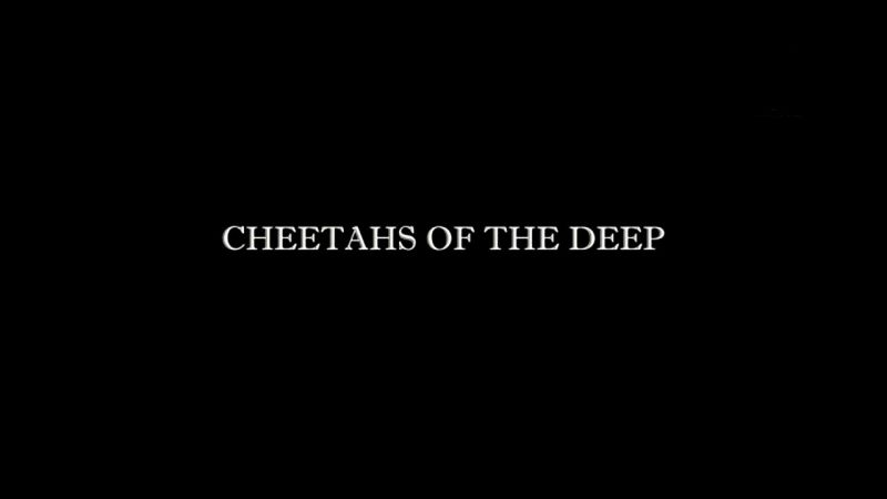 Image: Cheetahs-of-the-Deep-Cover.jpg