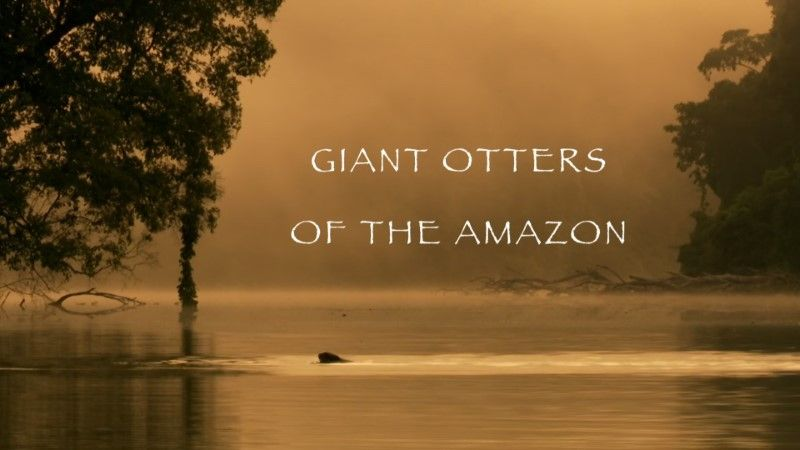 Image: Giant-Otters-of-the-Amazon-BBC-Cover.jpg