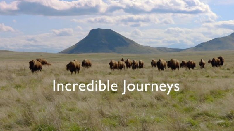 Image: Incredible-Journeys-BBC-Cover.jpg